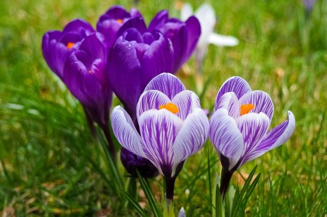 aktywna-wiosna-1