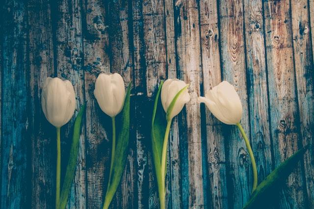 aktywna-wiosna-2