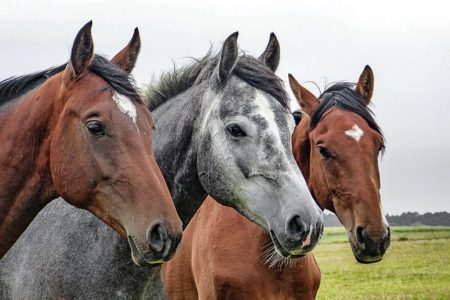 Jeździectwo konne wpigułce